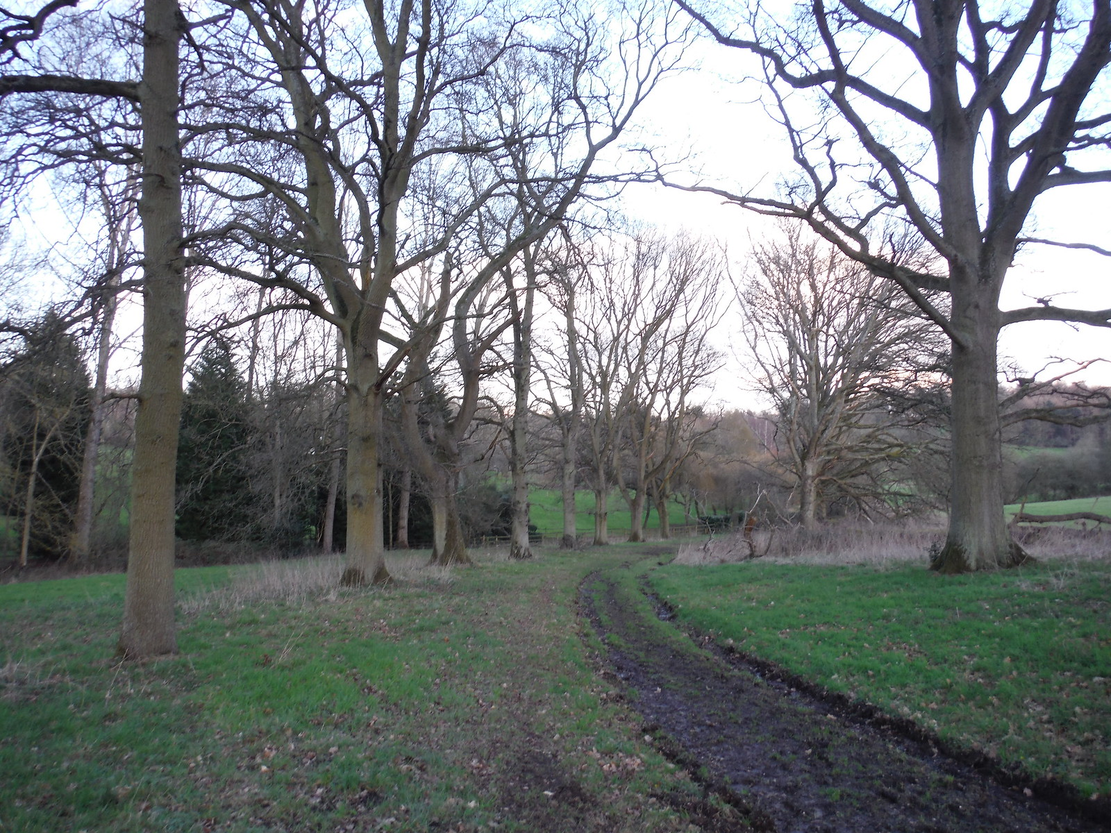 Tree-lined track, Midgham Park SWC Walk 117 Aldermaston to Woolhampton (via Stanford Dingley)