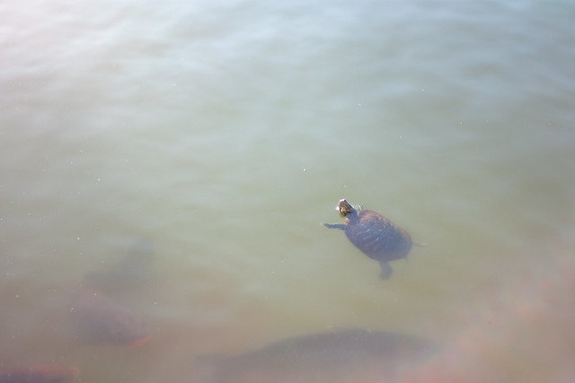 Little Turtle Floating in Spac