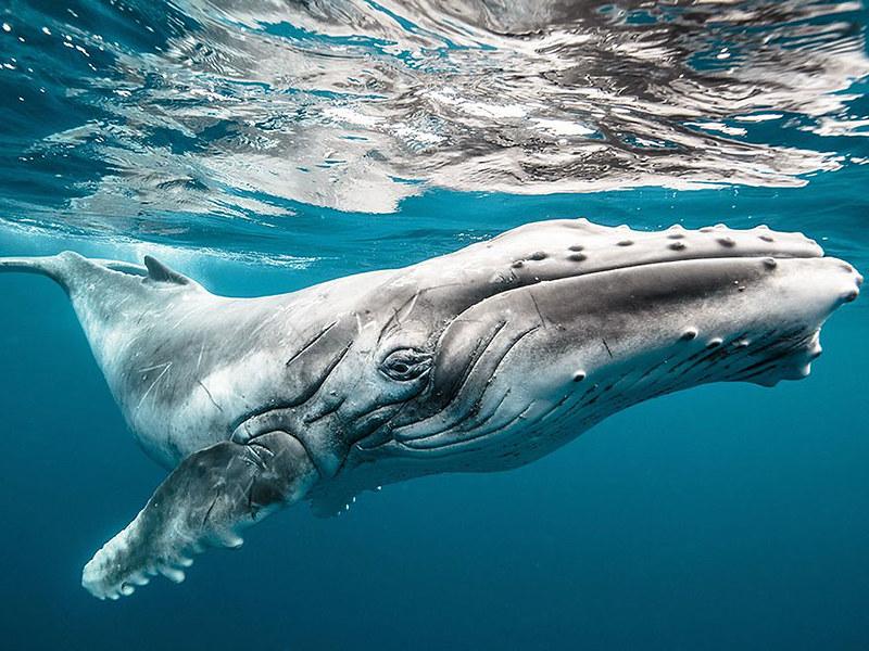 world-whale-day-photos-20__880