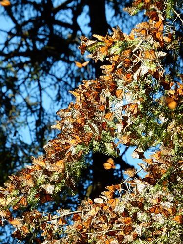 Reserva Mariposa Monarca - 4