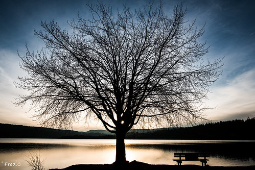 blue sunset sun france tree water french soleil coucher lac jura arbre banc malbuisson franchecomte remoray