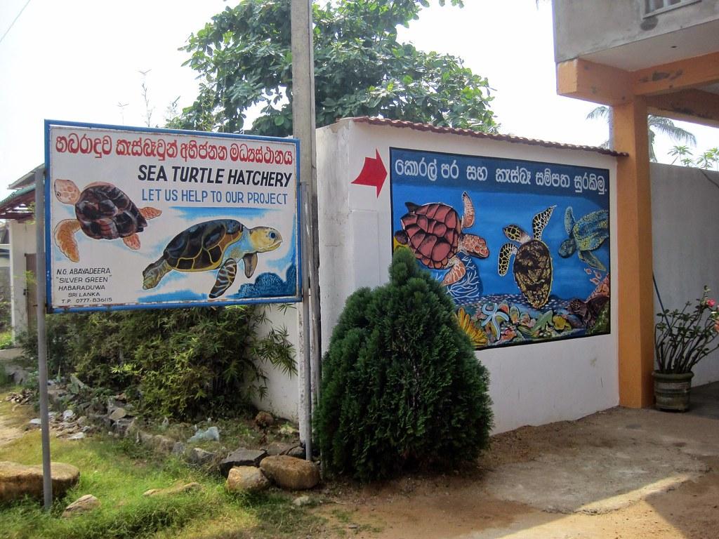 2012 Sri Lanka - Habaraduwa und Umgebung