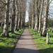 Small photo of Abbots Langley Walk - March 2016 - JPP-3841