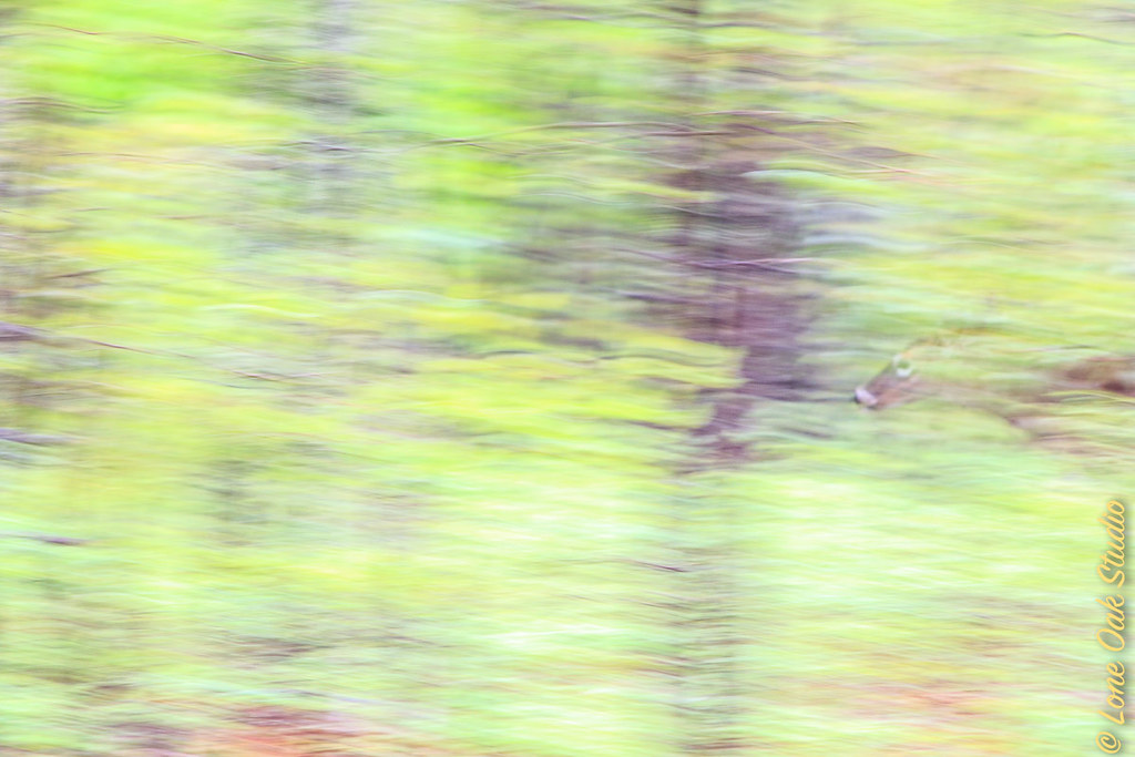 Slipping through woods on a spring morning