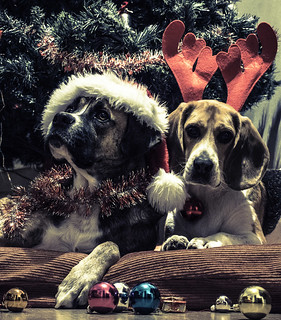 Christmas dogs | by Xeviphotorider