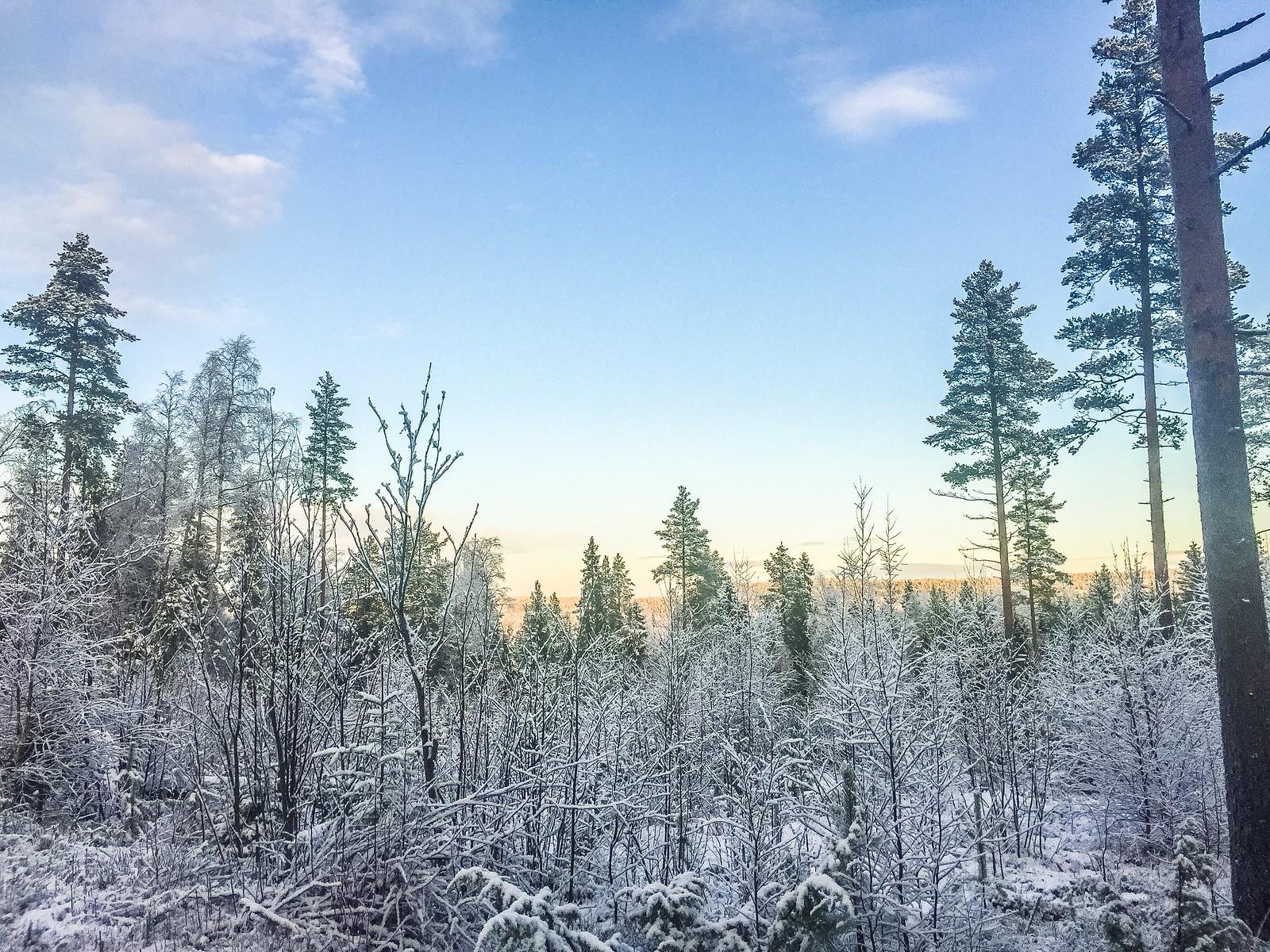 Narniaskogen