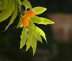 Frutti e frutta