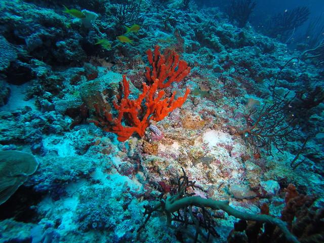 Maldives: Nudibranch