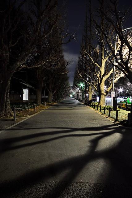 冬のイチョウ並木