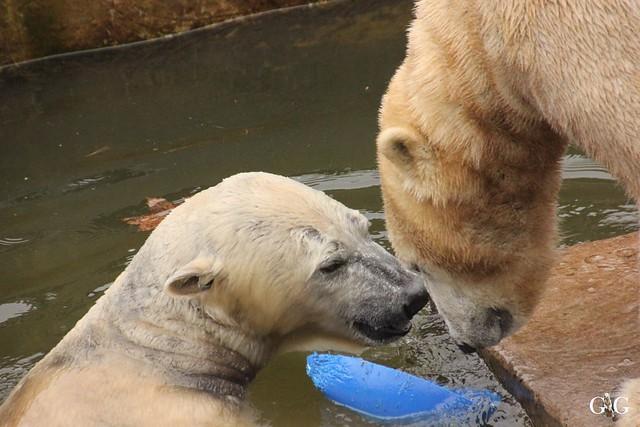 Wasserspaß für Tonja+Wolodja Tierpark 06.03.20167