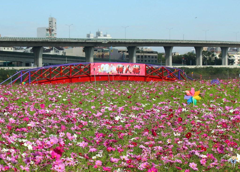 大里橋花海 (1)
