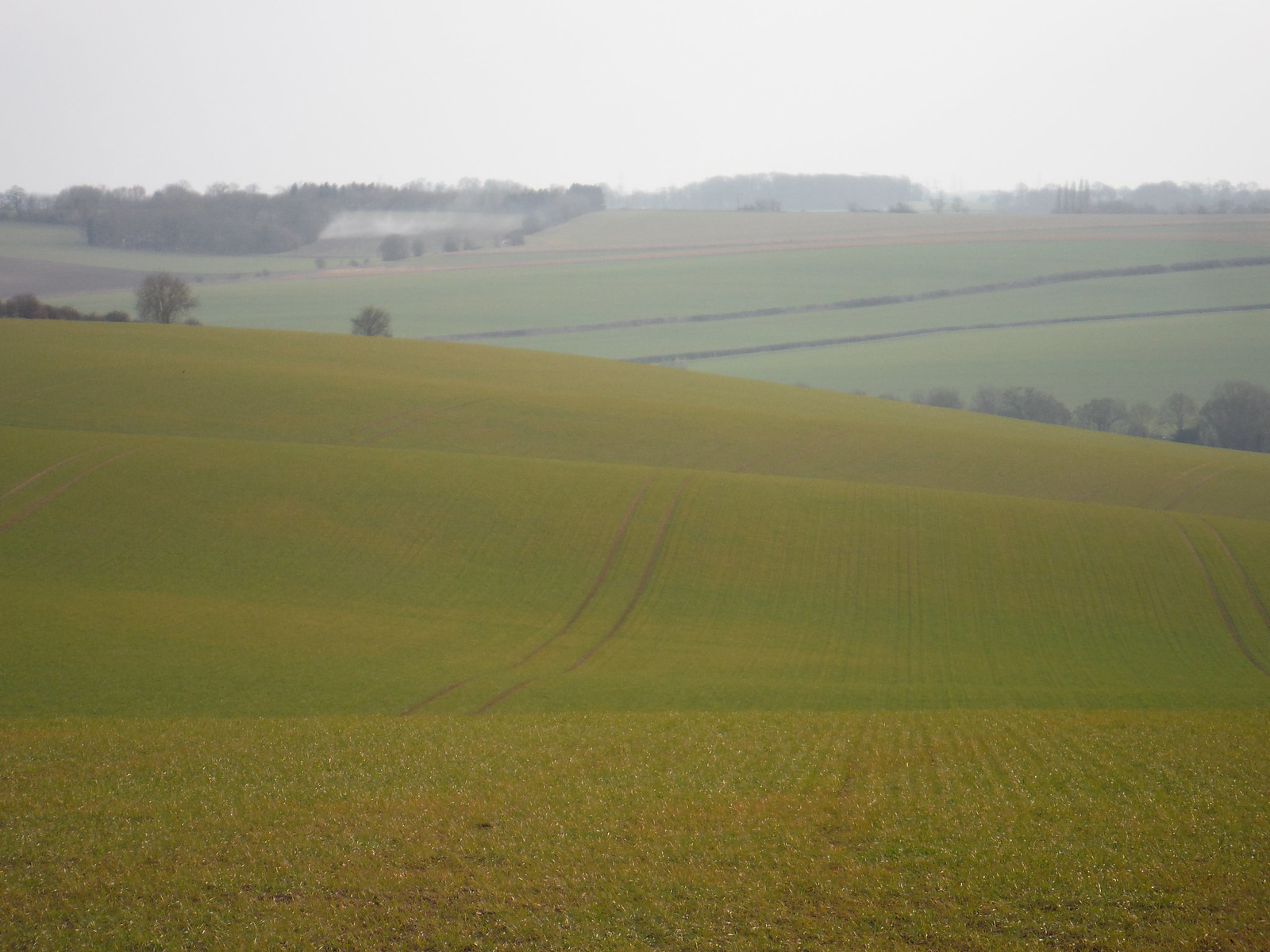 Rolling Fields in the Wendene Valley SWC Walk 116 Wendens Ambo [Audley End station] Circular
