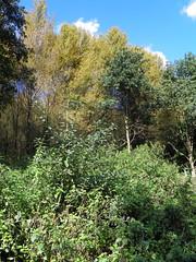 GOC Walthamstow to Stratford 128: Wick Wood, Hackney