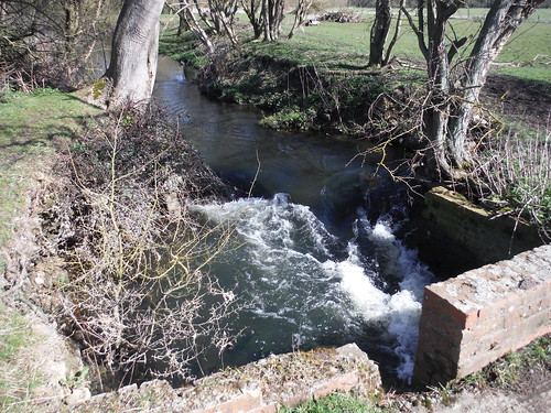 Millstream off the Thame, near Notley Abbey