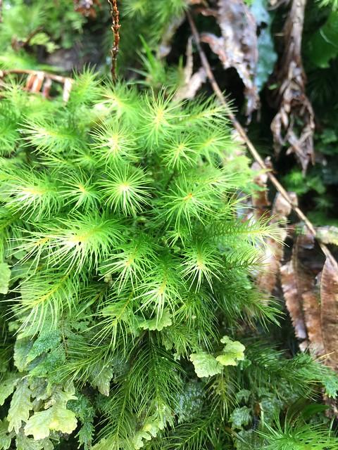 綠茸茸的真可愛!