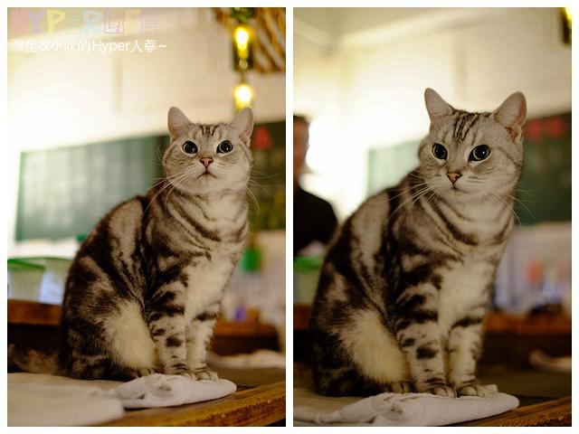 26080628706 379422dc51 z - 超可愛貓咪寵物餐廳【巷子有貓】,逢甲巷弄無菜單美食~一定要預約才吃的到的日式家常菜!(已歇業)