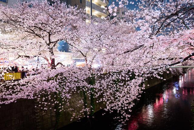 Blooms Dance