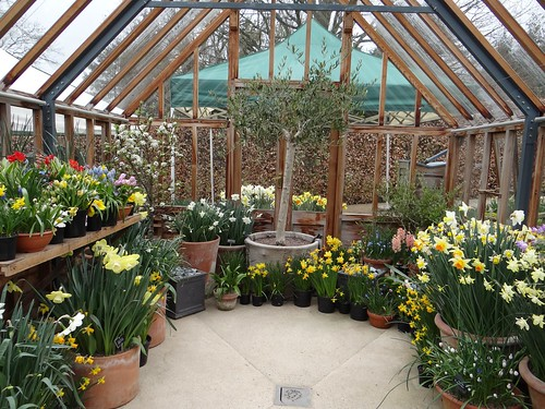 Scent filled greenhouse at Harlow Carr