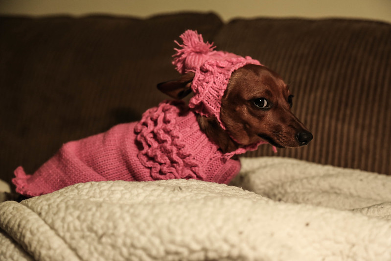 Lucy Peanut is not impressed with her new outfit.