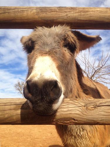 burro 2