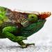 Chameleon by Erland R.N.