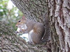 Squirrel - Florida by SpeedyJR