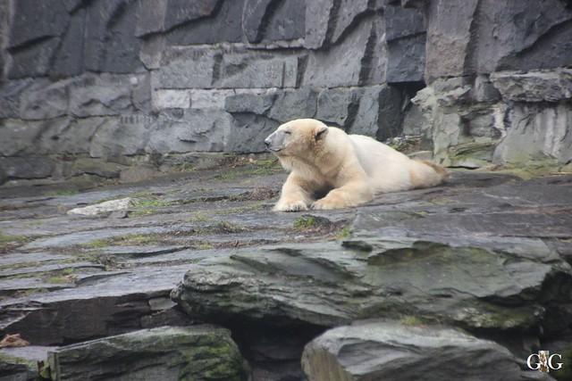 Besuch Tierpark Friedrichsfelde 14.02.20168