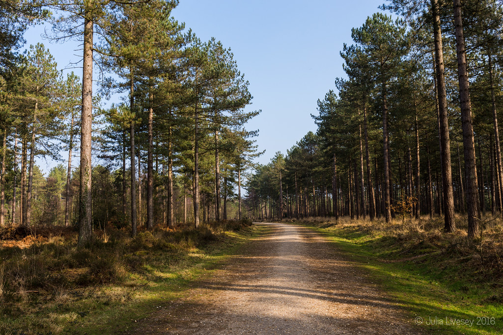Track in Wareham Forest
