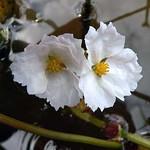 Boreal Flora