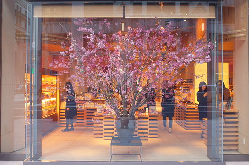 cherry blossoms in shop