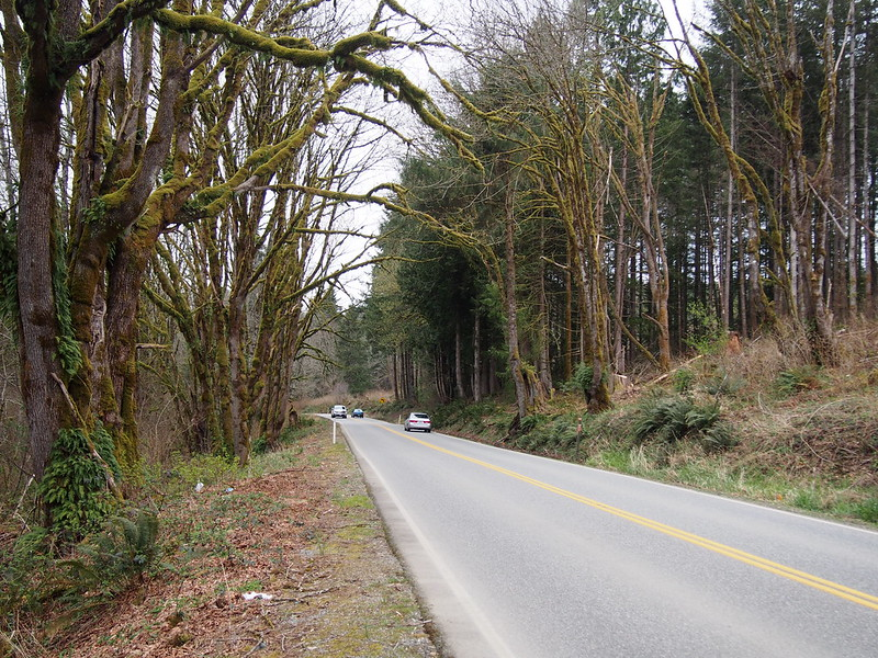 SR-9: rural forest