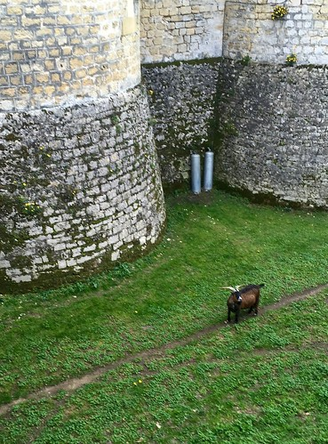 Goat in a moat