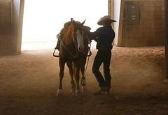 #cowboy #countrylife #horsesofinstagram #horse