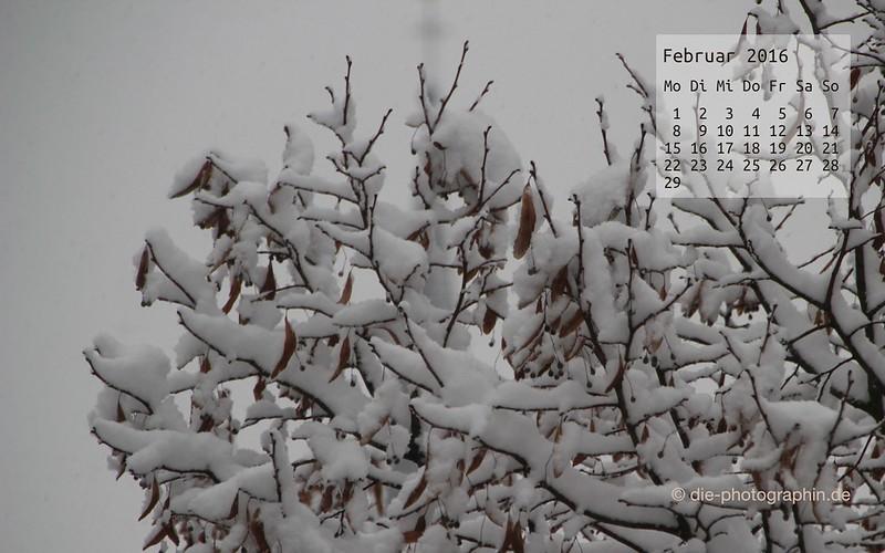 schneebaeume_februar_kalender_die-photographin