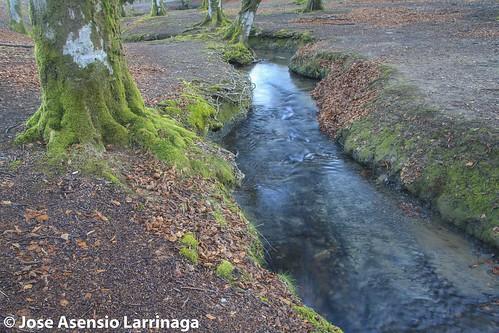 Parque Natural de Gorbeia  #DePaseoConLarri #Flickr -3060