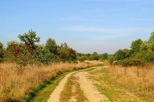 road trees summer sky plants nature landscape view path poland polska pilica lodzkie łódzkie