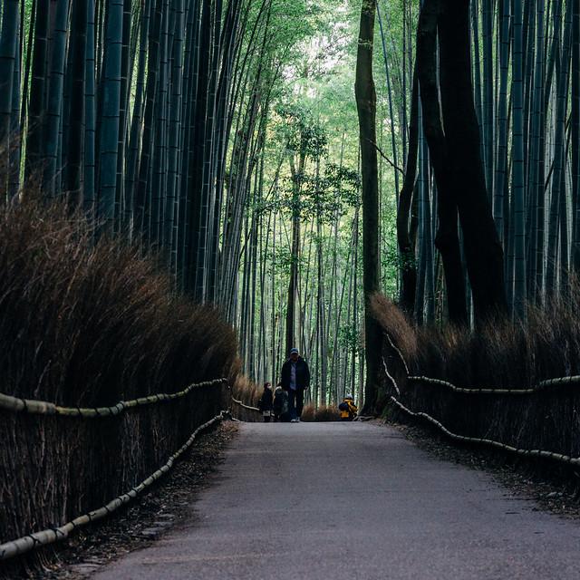 Kyoto_Sagano_102