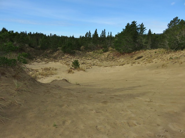 Dune along the Sutton Creek Trail
