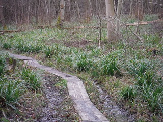 More Boardwalks in Broxbourne Wood