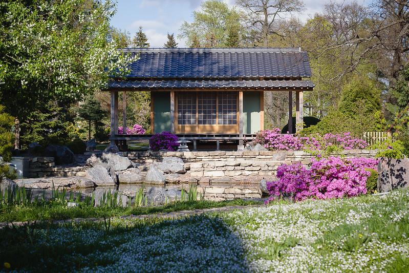 Spring Blossom 2015