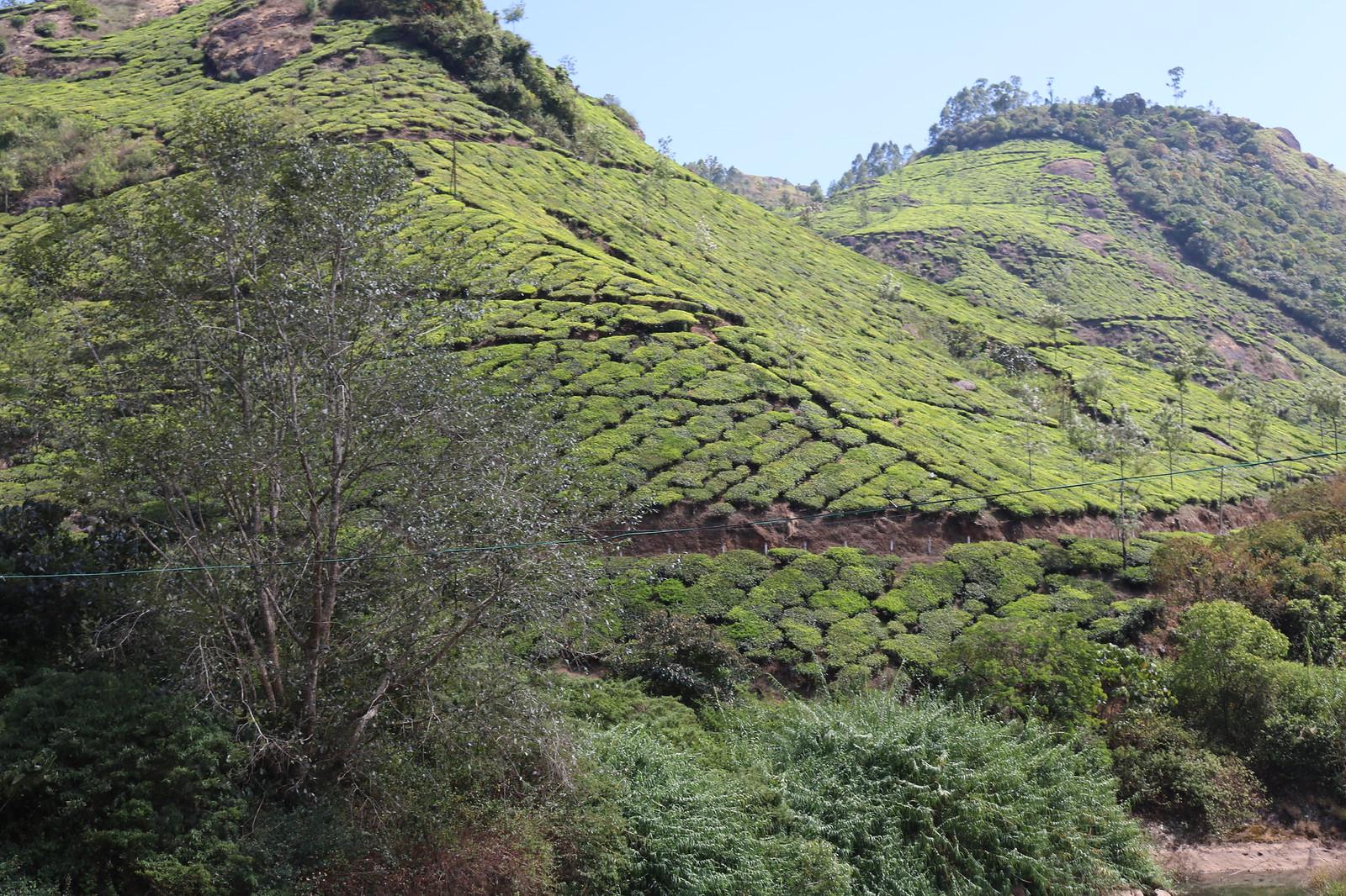 Tea Gardens en-route Munnar