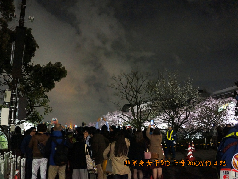 日本東京北之丸公園千鳥之淵賞夜櫻花09