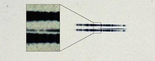 Placa de 1917 del espectro de la estrella de van Maanen