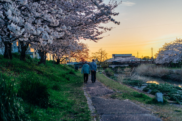 CherryBlossoms_304