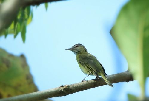 naturaleza tree green bird nature ecology liberty libertad free ecologia
