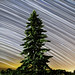 Evergreen Giant by Matt Molloy