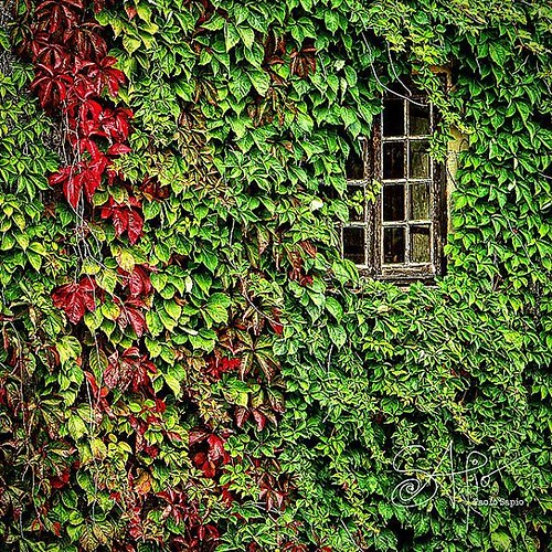 Follow @paolosapio #photoplaces #photography #photocity #streetphotography #nature #beautiful #spring #primavera #flowers #naturaleza #green #natura #natureza #vida #flores #plantas #natural #tree #flower #paisaje #window #architecture #edera #ivy #garden