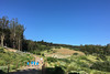 Presidio Trail Run - Trail blue skies