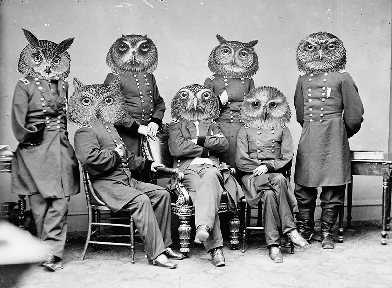 Owls of the Republic
