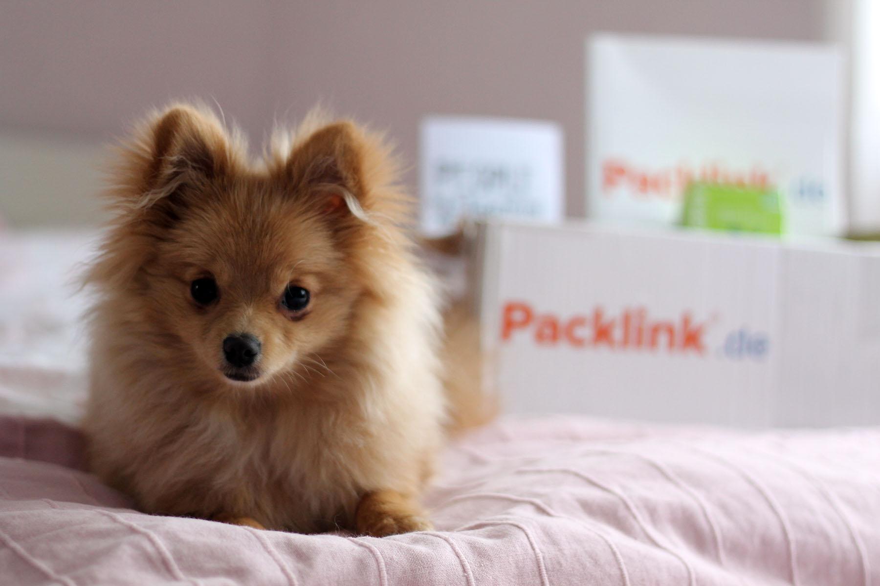 milow-zwergspitz-pomeranian-hund-dog-packlink-modeblog-fashionblog